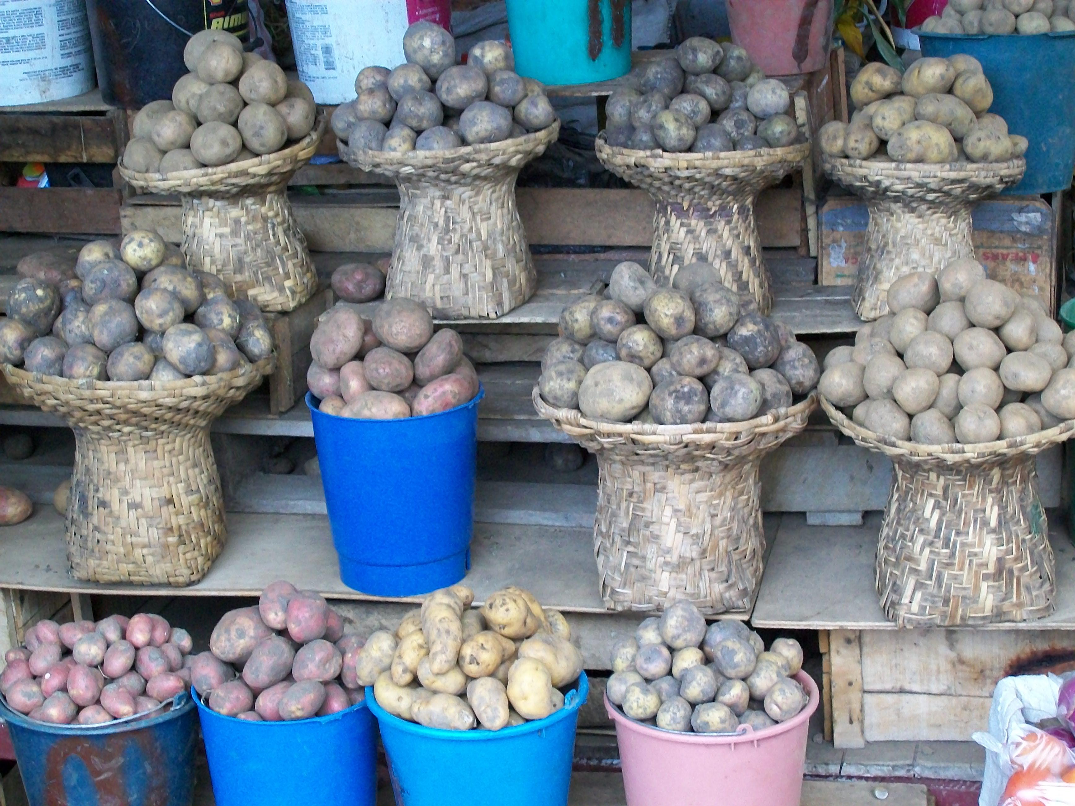 Anni_Privat_unterschiedliche Kartoffeln